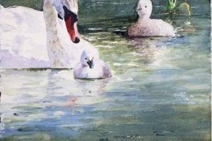 Nicht so schnell (c) ein Schwanen Aquarell von Hanka Koebsch k