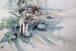 Suchender (c) ein Wolfs Aquarell von Hanka Koebsch k